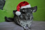 Christmas Cute Animal